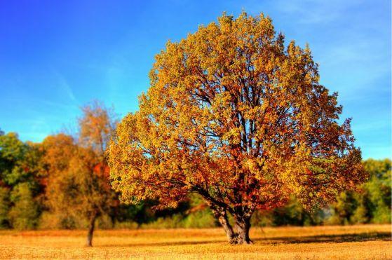 tree-99852__480